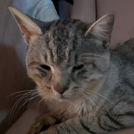Meet Casper the Wonder Cat