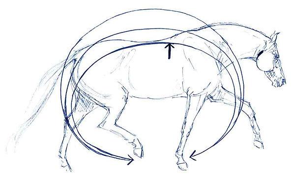 Pferderücken, Lockere Bewegung, Pferd Übungen,