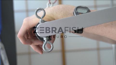 ZebraFish Neuro - 2017