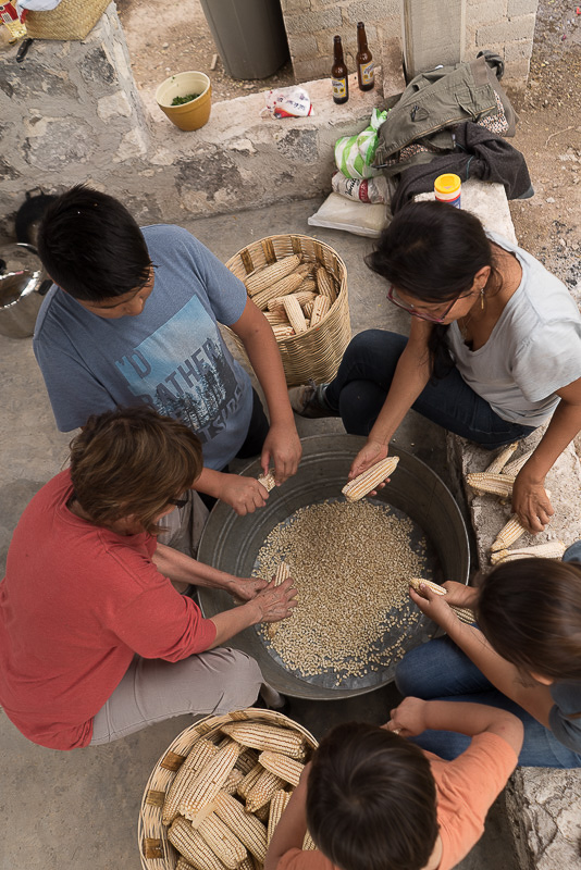 shucking maize for the 200 tamales