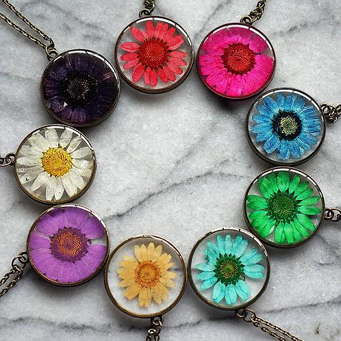 10 Chrysanthemum  Starter Pack- Aged Bronze