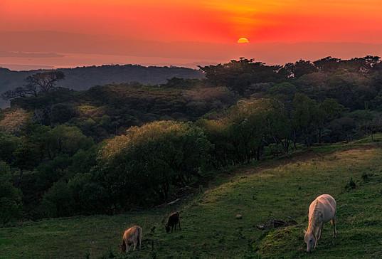 Monteverde Sunset