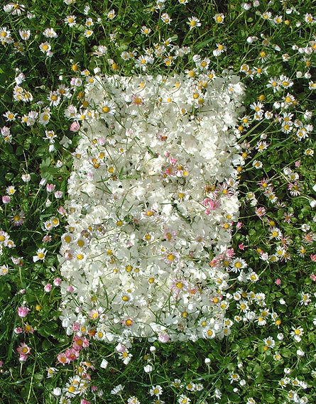 schneeballblütenrechteck2.jpg