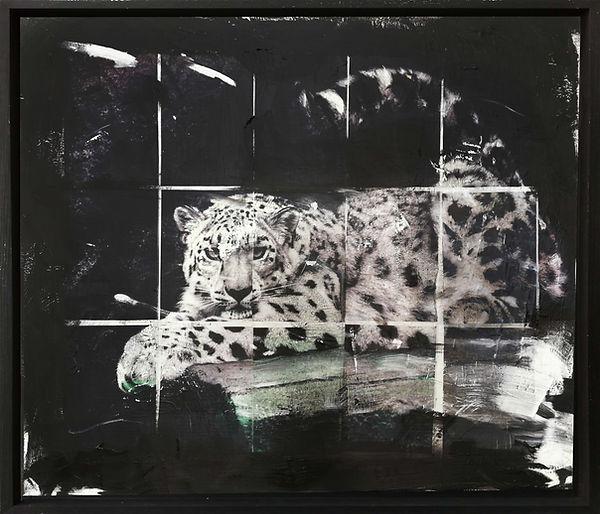 Amur Leopard mit Rahmen.jpg