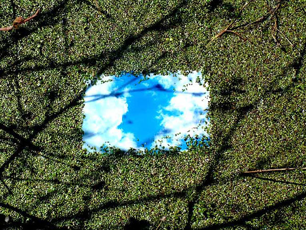 himmelundwasserlinsen2.jpg