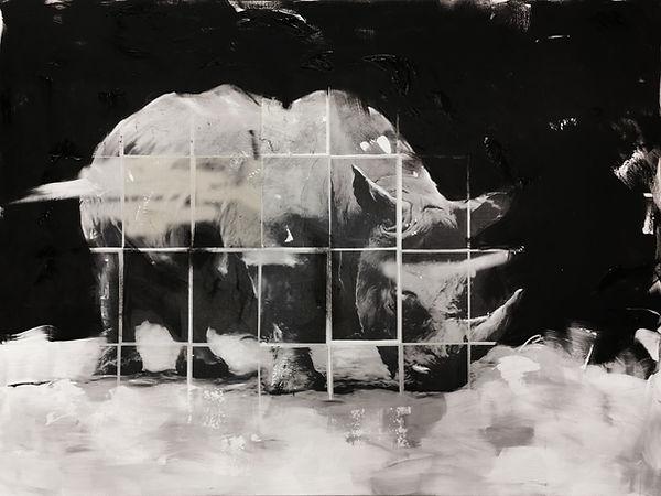 Rhino groß.jpg