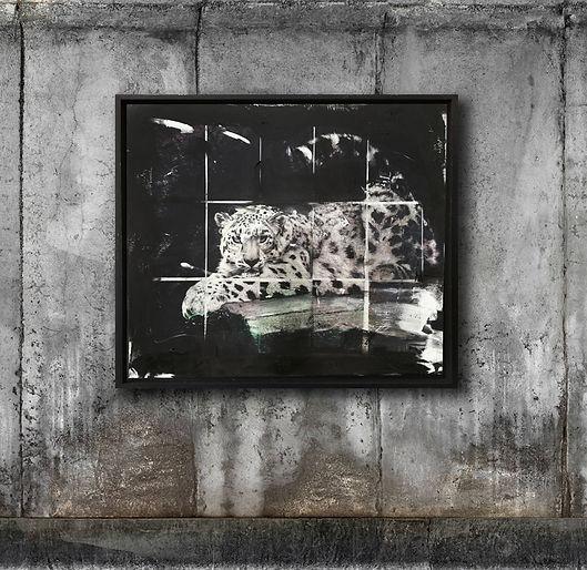 Amur Leopard im Raum.jpg