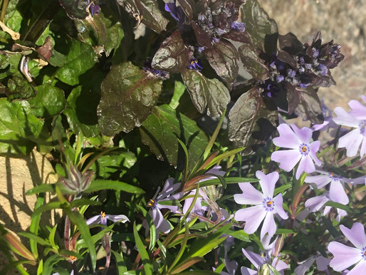 The Best Plants to Landscape Your Pond