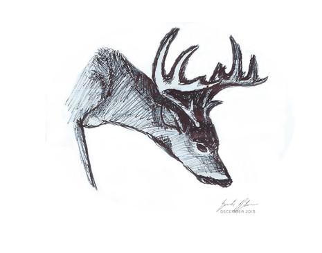 DeerSketch.jpg