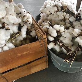 cotton3.jpg