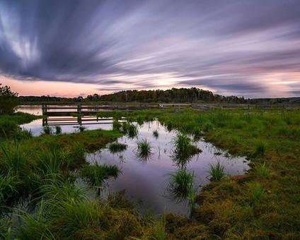 A New Marsh