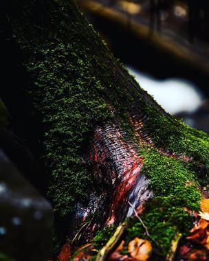 Blood Red Under Moss