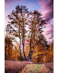 Chilly Autumn Sunrises