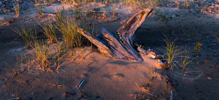 Sunlit Sands
