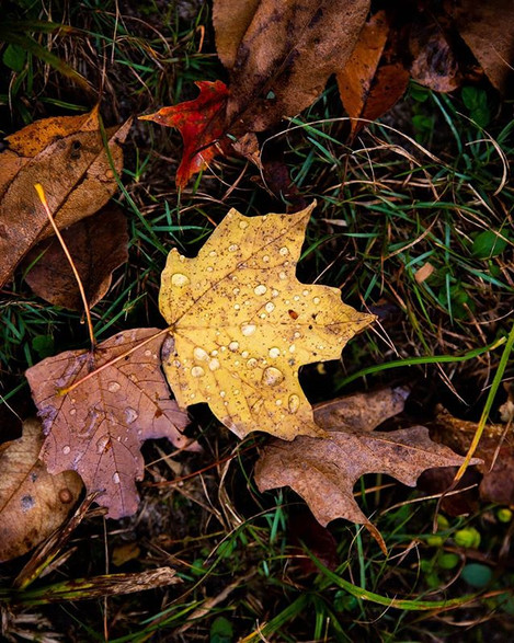 Autumn's Dew