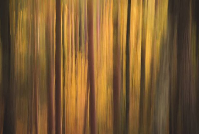 Intentional Camera Movement, or ICM, is