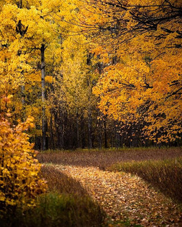Walking into Fall