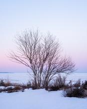 Winter's Stillness