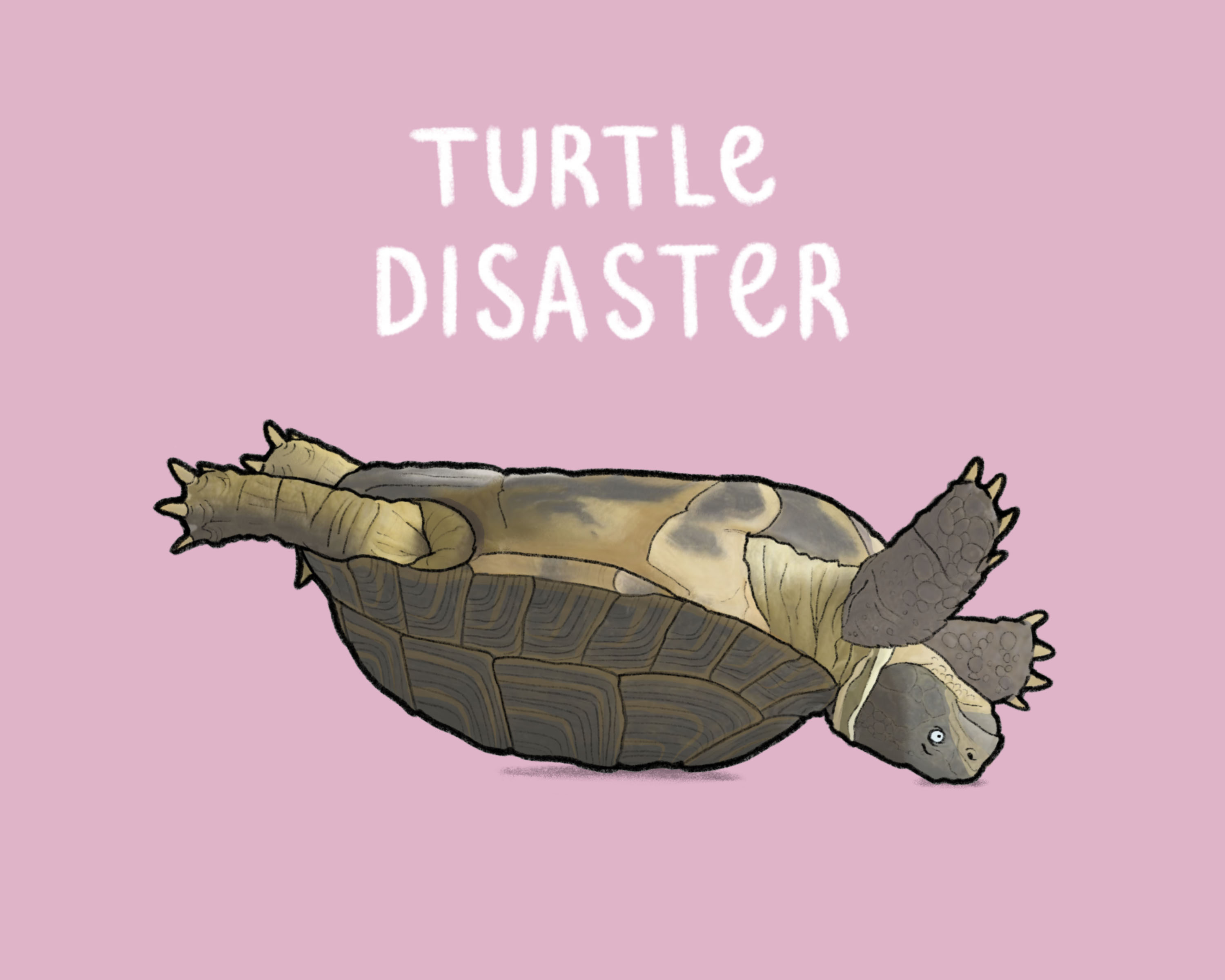 Turtle Disaster