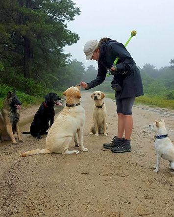 natucket dogs beach packactive