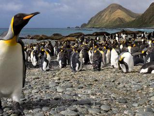IUCN: Explaining Ocean Warming