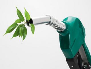 Pandas and Sustainable Bio Fuel