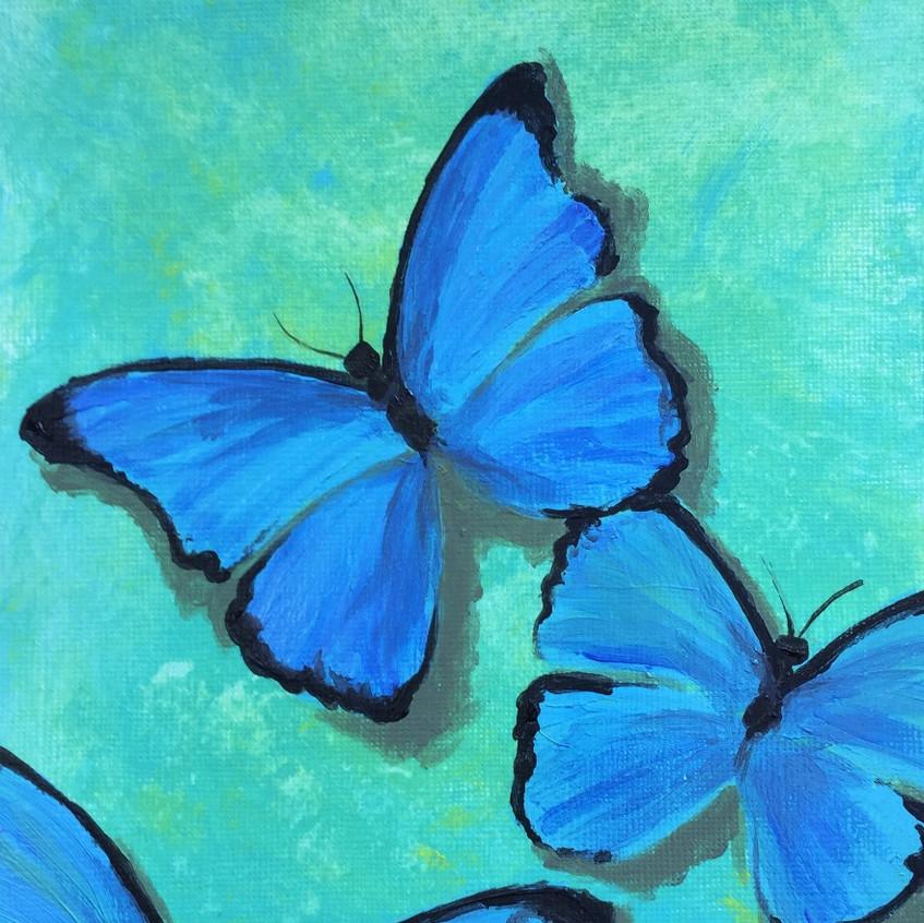 Escape2Art Morpho Blue butterflies