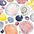 Mon 5th July - Shells - W'col Pencils