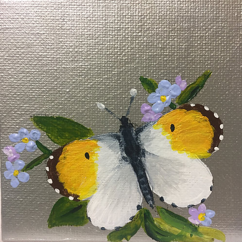 Small Framed Original Acrylic painting - Butterfly series - Yellow Tip