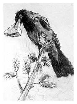 Анималистика ворона