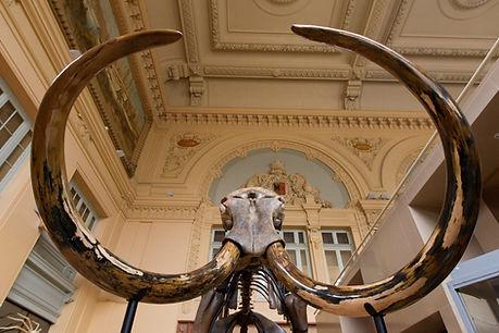 12-08-mammoth.jpg