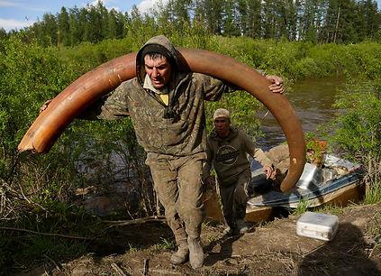mammoth-tusk-hunting-russia-13-59437b961