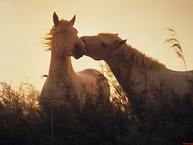 fotos de caballos bonitos.jpg