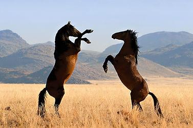 caballos-mustang-salvajes.jpg