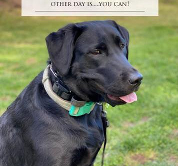 Whats super awsome about training your dog today?