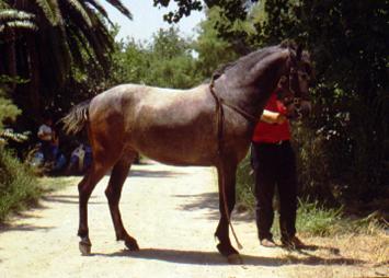 ελληνικά άλογα
