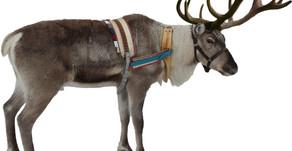 Reindeer Training Speeding Up