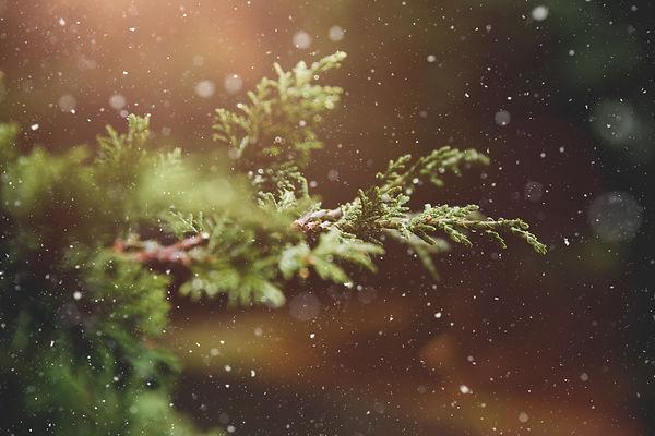 advent-blur-branch-237180.jpg