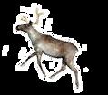 flying reindeer