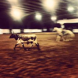 Heading the Steer