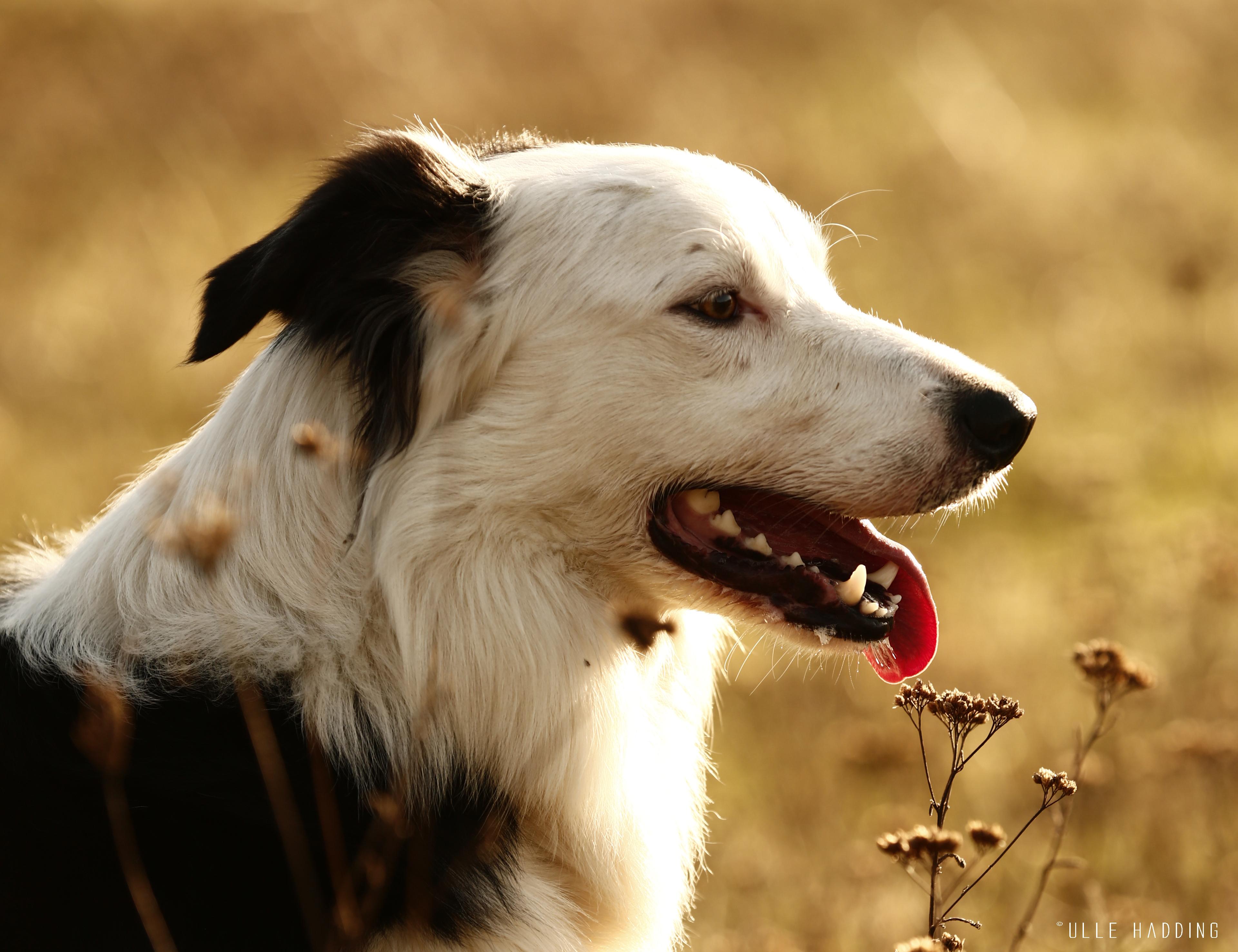 JBAC Hundeschule