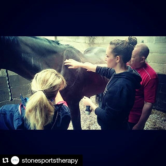 Sports Massage for Horses Course