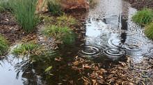 Rain or Shine Spotlight | The Time for GI