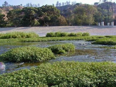 Los Angeles River biodiversity