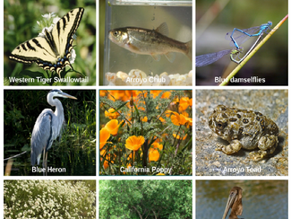 #SummerScienceFriday | Explore the Wild of the LA River