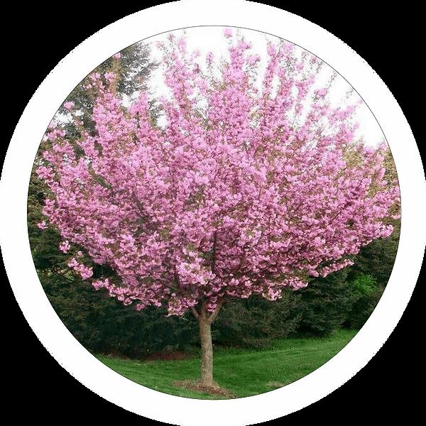 tree-min-2.png