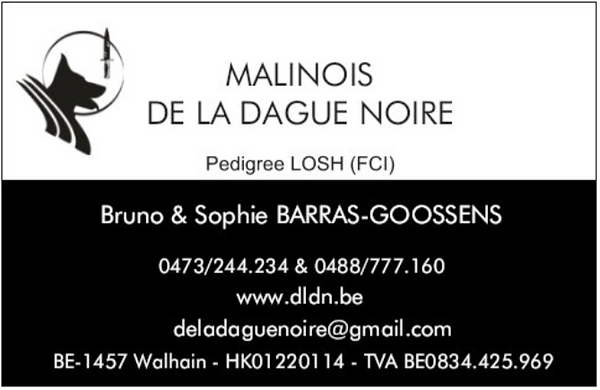 Elevage de malinois de la Dague Noire - Belgique - DLDN
