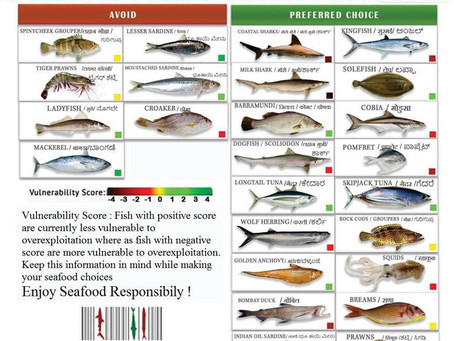Know Your Fish: Seasonal Fish Recommendations