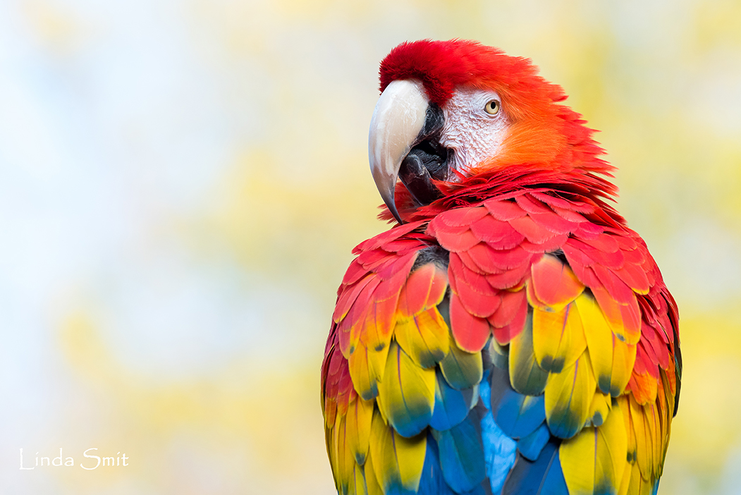 perroquet ara zoo amneville