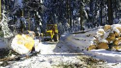 Winter Wald